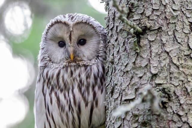 What Does it Mean When You See an Owl