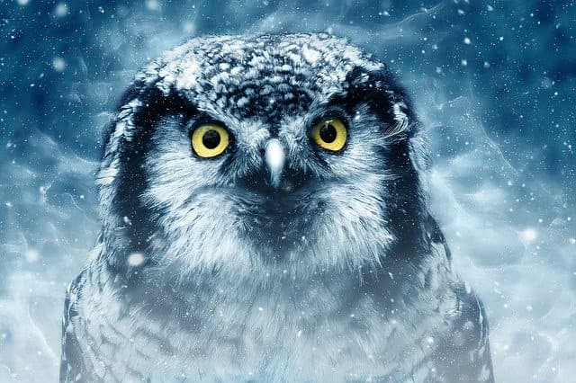 What does it mean when an owl hoots at night