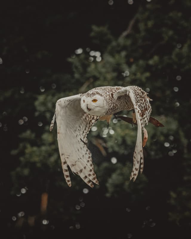 What does it mean when you see a white owl