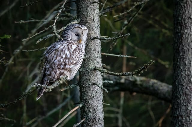 what does it mean when you see an owl at night
